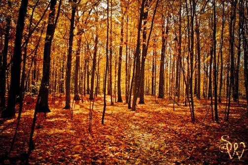 Beautiful Bruce Trail