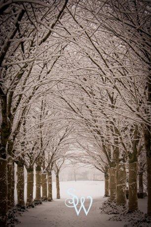 Snow Canopy