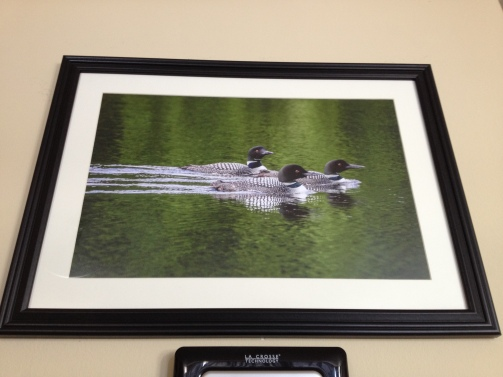 Framed Loon Raft