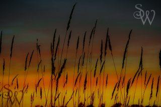 Fluid Grass