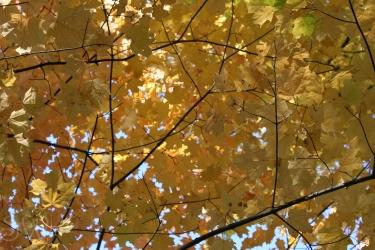 Fall-12