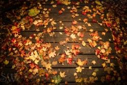 October 14th 2012 022