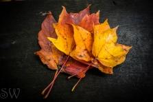 October 14th 2012 087