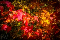 thanksgiving day2012-10