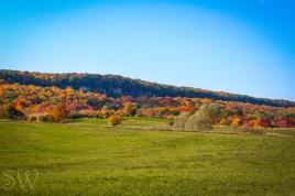 thanksgiving day2012-11