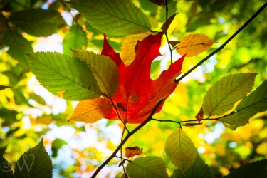 thanksgiving day2012-2