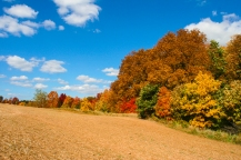 thanksgiving day2012-6