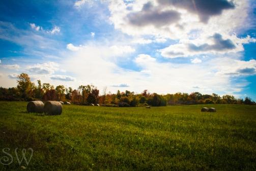 thanksgiving day2012-7