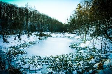 Light Icy Wetlands