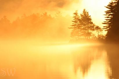 Light in the Mist