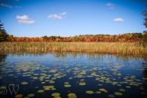 Wonderful Wetlands