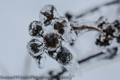 Frozen pods