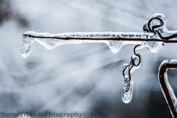 Icy Vine