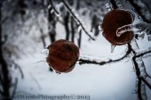 Frozen Rot