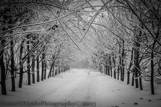 Icy Lane