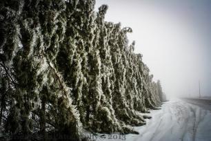 Frozen Hedge