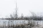 Cold Pond