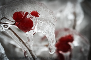 Frozen Red