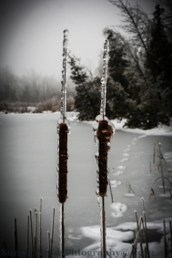 Encapsulated Cat Tails