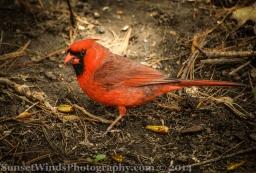Cardinal Official