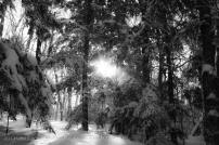 Snow through trees