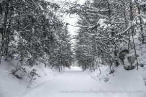 White Walk